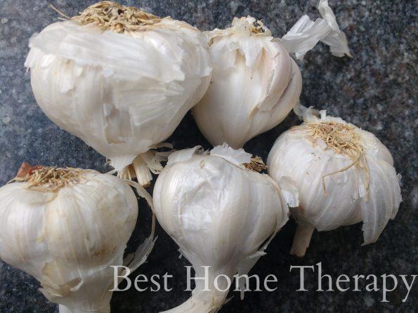 rp_garlic-595x446.jpg